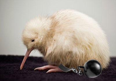 Rare Kiwi Chick Born In Wildlife Centre