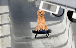 Stray dog wins luge olympic gold medal