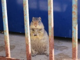 Squirrel Found Guilty for Quad Robberies