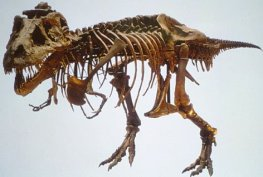 dinosaur-fossil-1