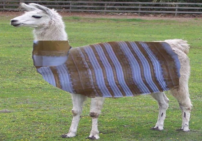 llama dress